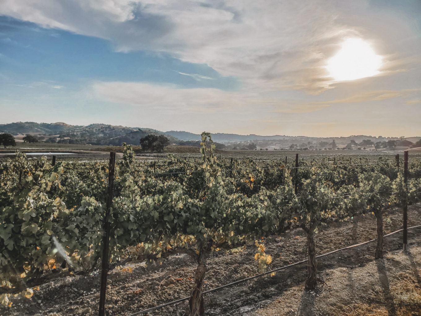 vineyards in paso robles wine country